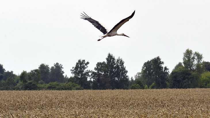 За пять лет сельское хозяйство Брянской области выросло на 35 процентов