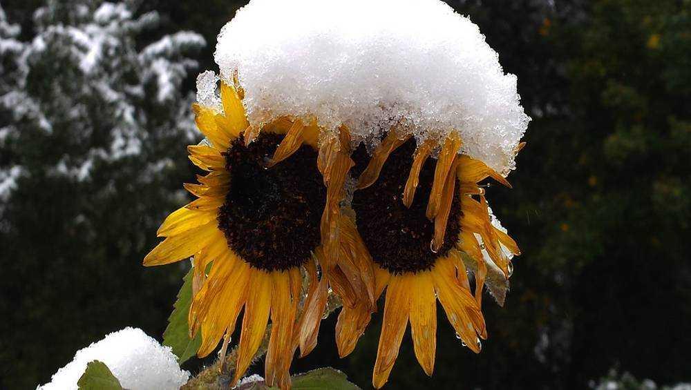 В Брянской области выпадет снег 7 и 8 октября