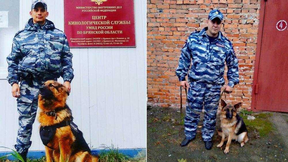 Брянские служебные собаки Вита и Люта раскрыли два преступления
