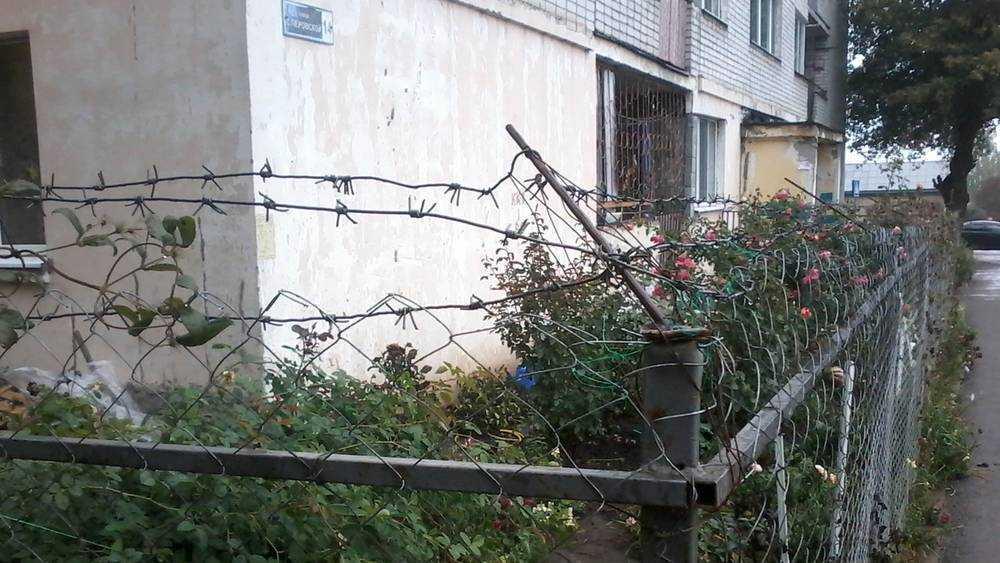 В Брянске колючей проволокой огородили цветник возле общежития