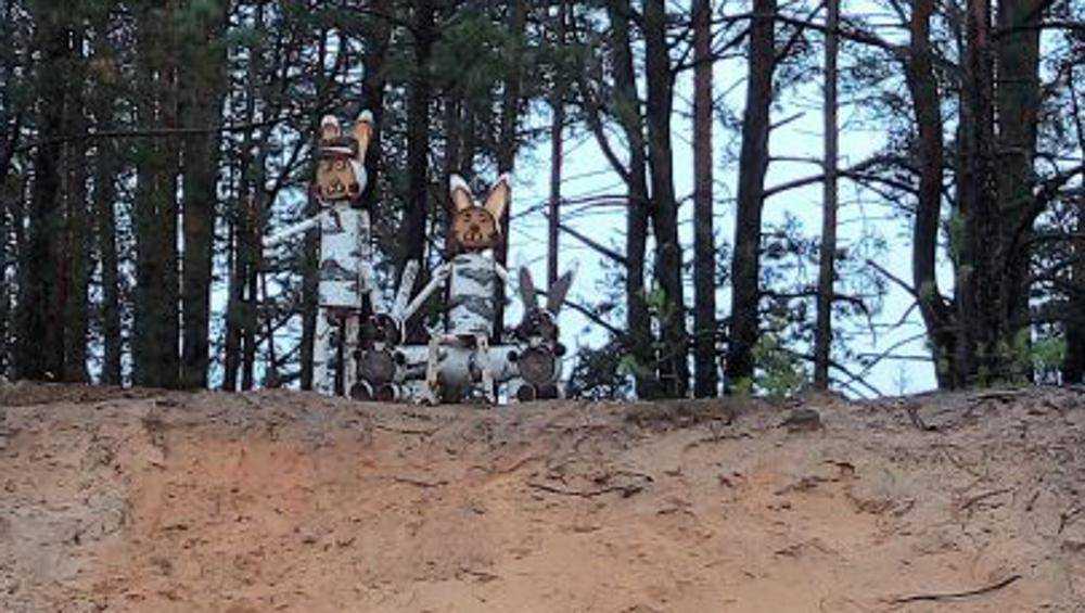 Зайцы вышли на дорогу встречать гостей заповедника «Брянский лес»
