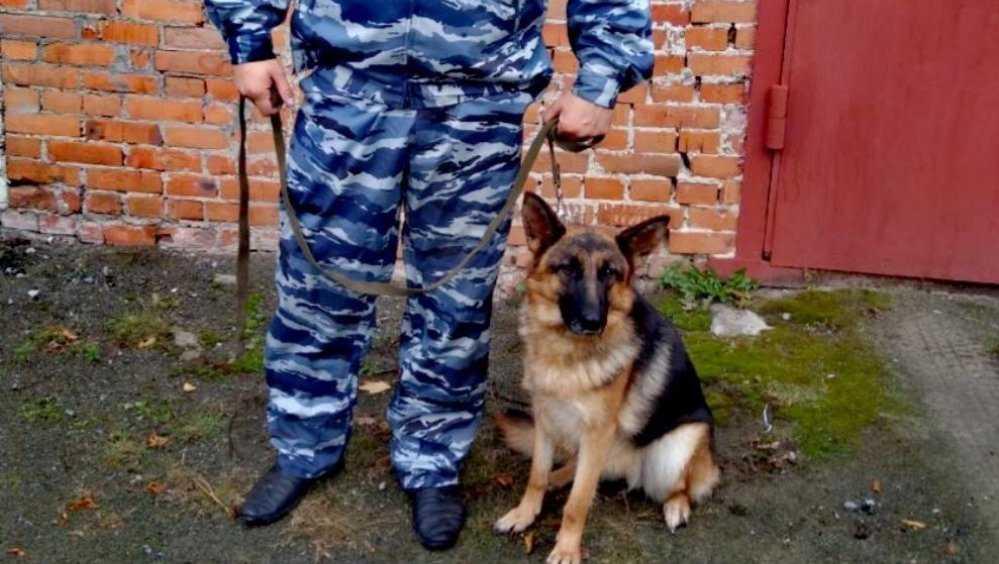 В Дятьковском районе овчарка помогла задержать угонщика мопеда