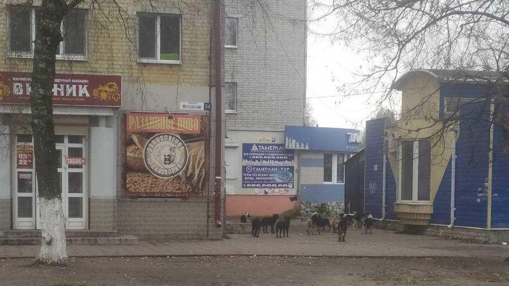 В Брянске собаки провели «пикет» возле алкогольного магазина