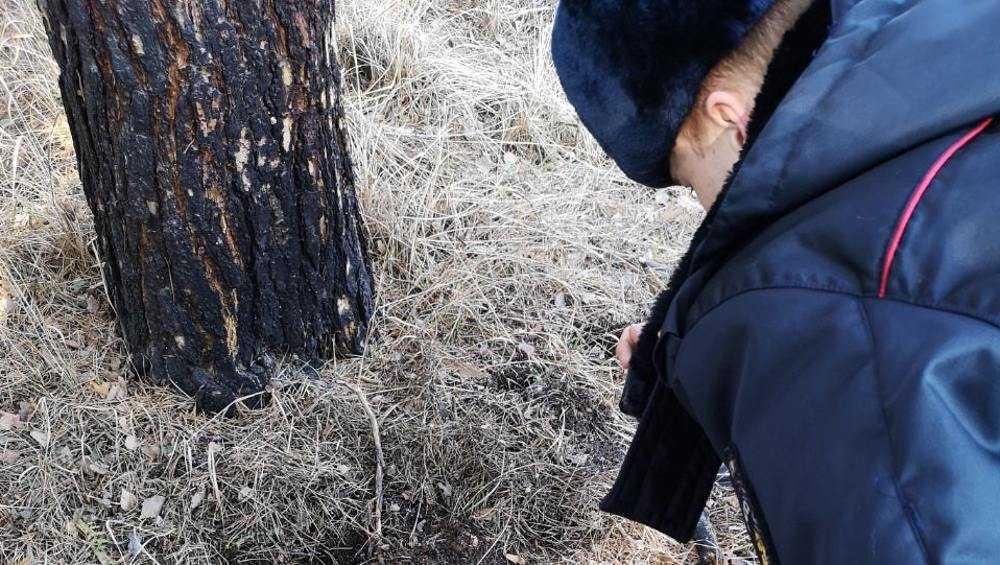 В Брянске осудили наркомана, пойманного бдительным селянином