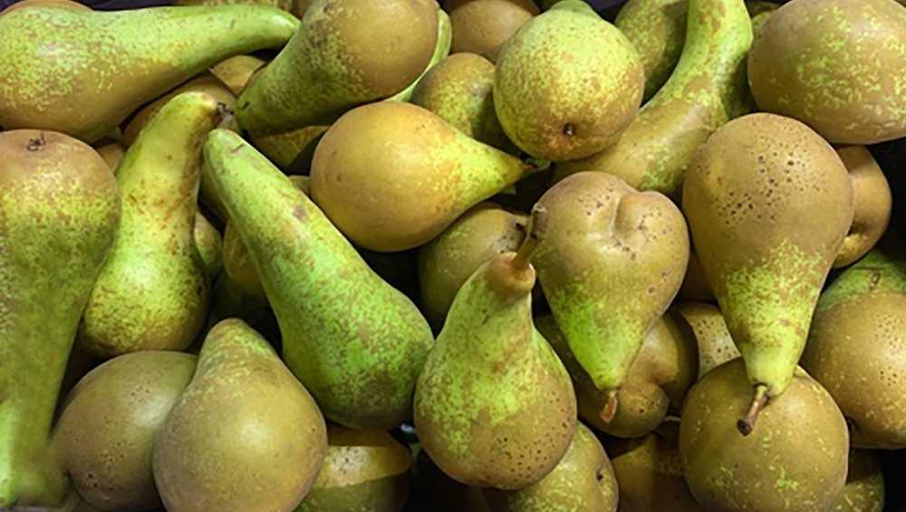 В Брянской области раздавили 20 тонн бельгийских груш
