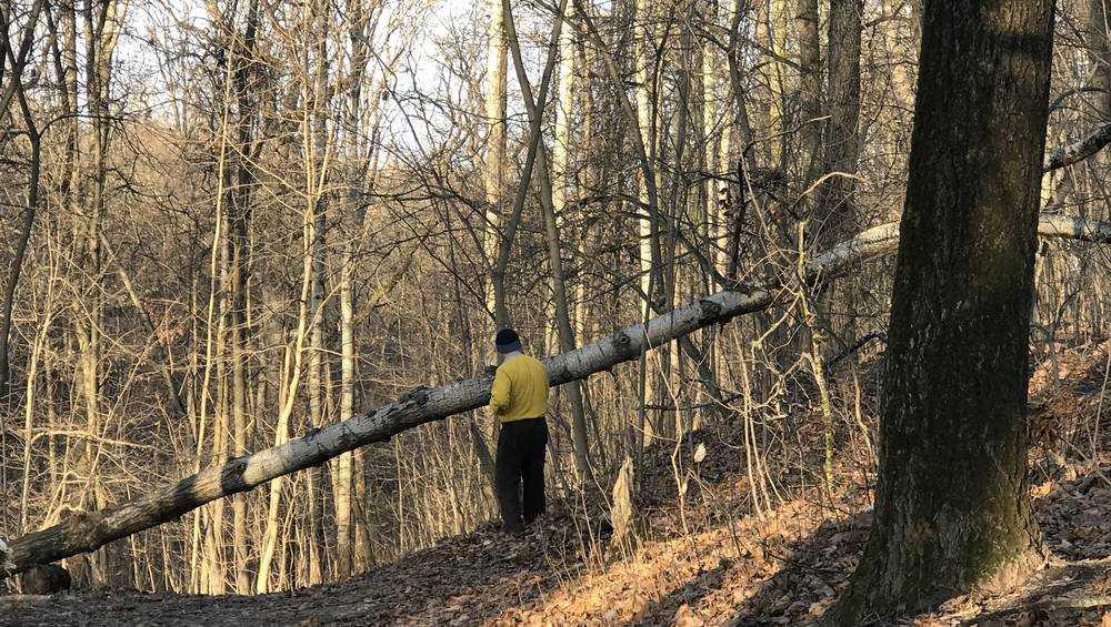 В Брянске очистили от упавших деревьев тропу здоровья в парке «Соловьи»