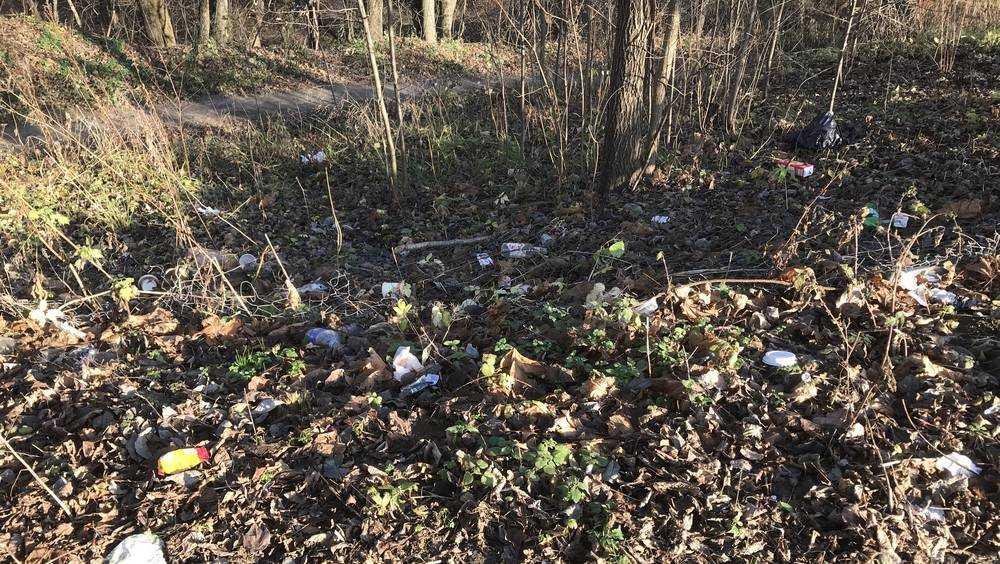 Под Брянском в садовом обществе «Березовая роща» любители пикников устроили свалку