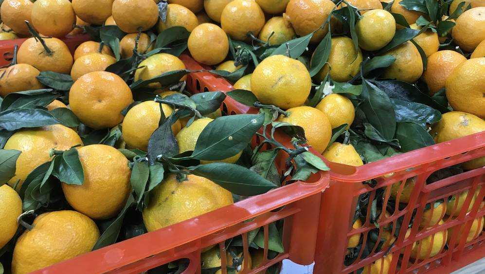 В Брянске отличные абхазские мандарины вытеснили китайскими