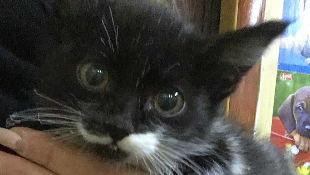 В Брянске чудом спасся замученный живодерами котенок