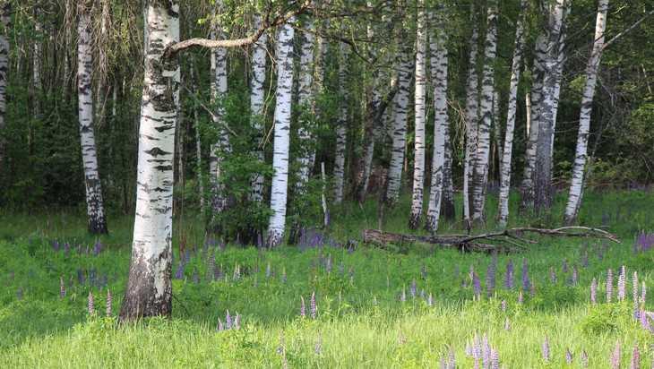 В Брянской области восстановили 72 процента лесов