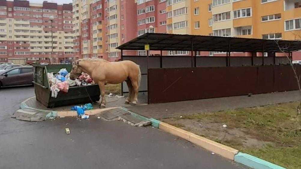 В Брянске рассказали жуткую историю о нападении лошади и собак на женщину