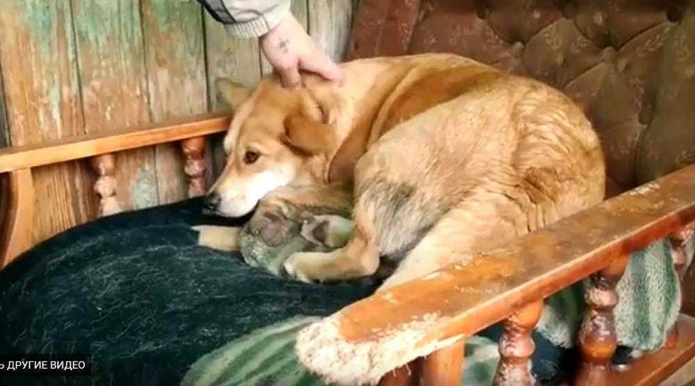 В Белых Берегах активисты построили вольеры для бродячих собак