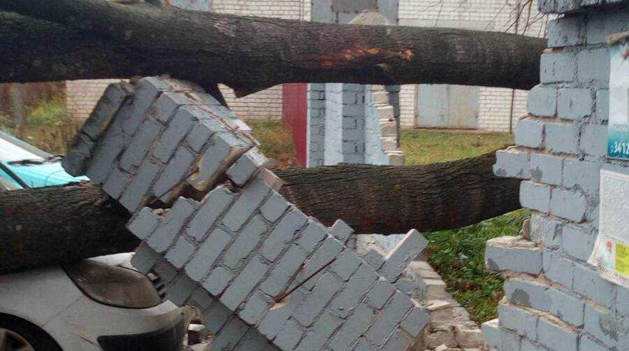 В Брянске возле больницы на легковушку рухнуло дерево