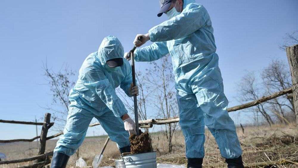 В Брянской области за три года покончат с бесхозными скотомогильниками