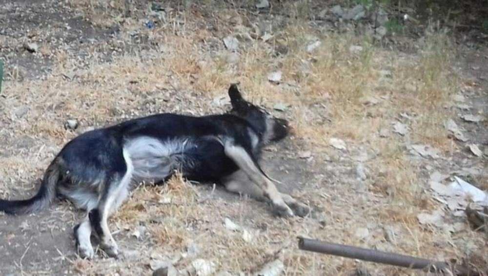 В Брянске сообщили о массовых убийствах собак и кошек