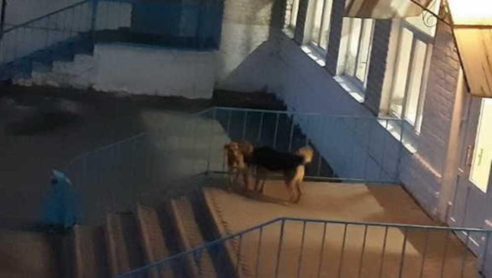 В Погаре территорию возле школы захватили бродячие псы