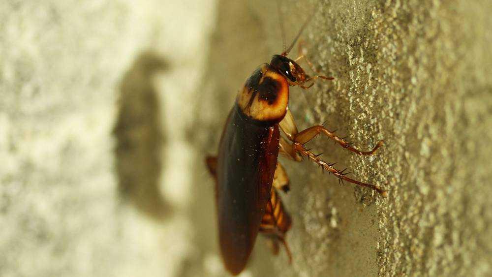Изнуренные жители Брянска увлеклись тараканьими бегами
