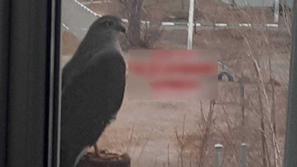 В Брянске сфотографировали редкую для города птицу