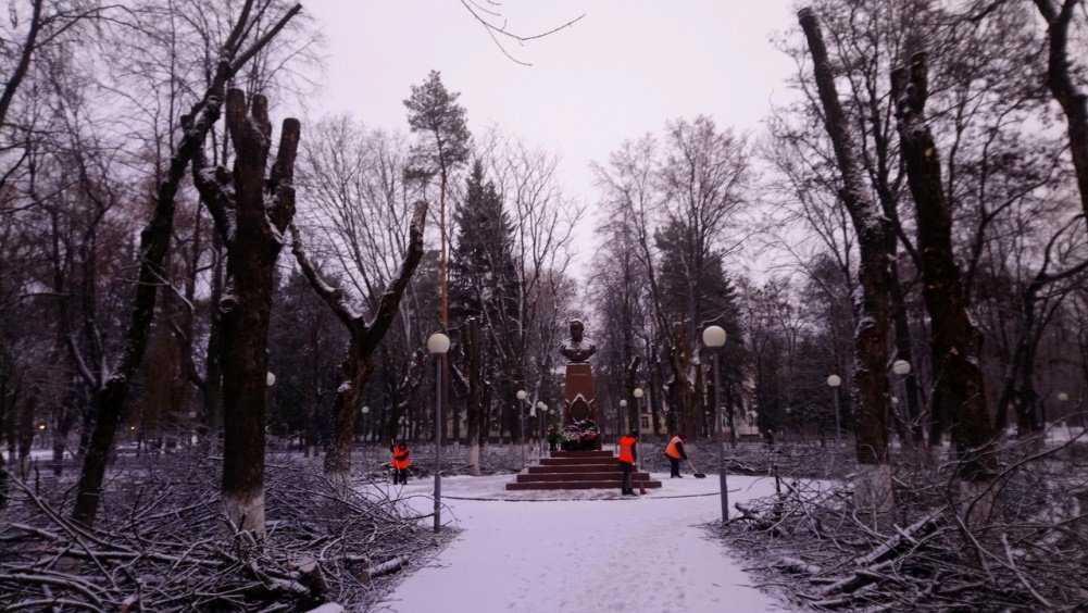 Брянскую журналистку возмутило уничтожение деревьев в сквере Камозина
