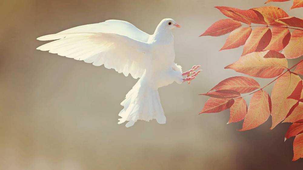 Петро поверил в души брянских голубей и стал носить им зернышки