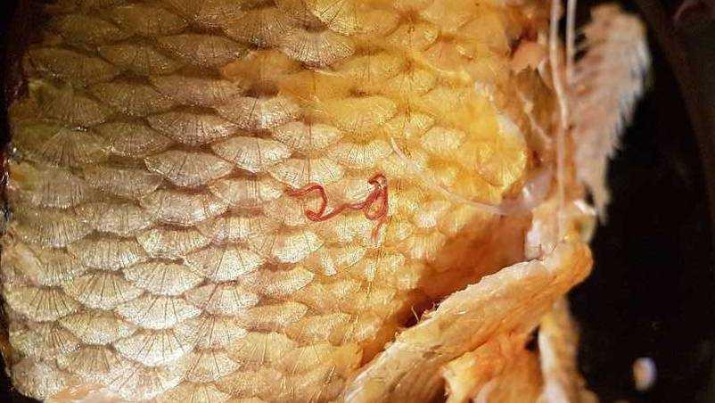 Жительницу Брянска огорчила купленная рыба с паразитами