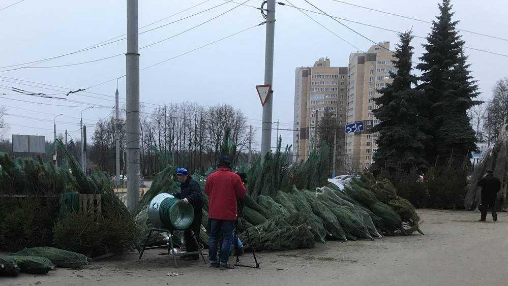 В Брянск завезли новогодние ёлки с Урала