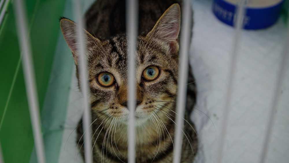 В Брянске пройдет фестиваль в поддержку бездомных кошек