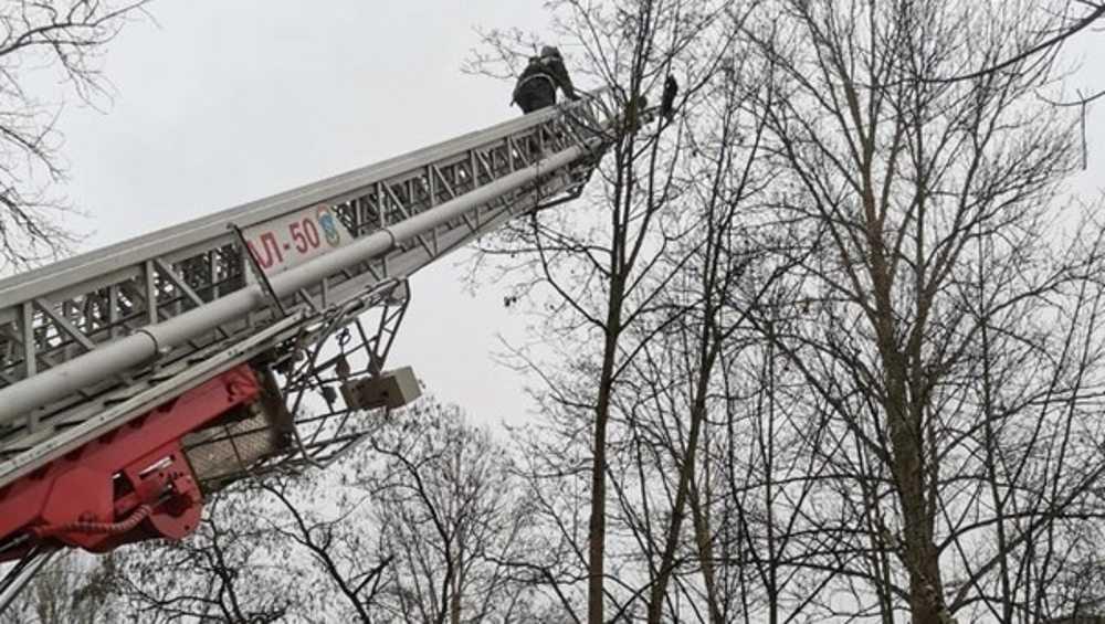 В Брянске пожарные сняли с дерева застрявшего на высоте кота