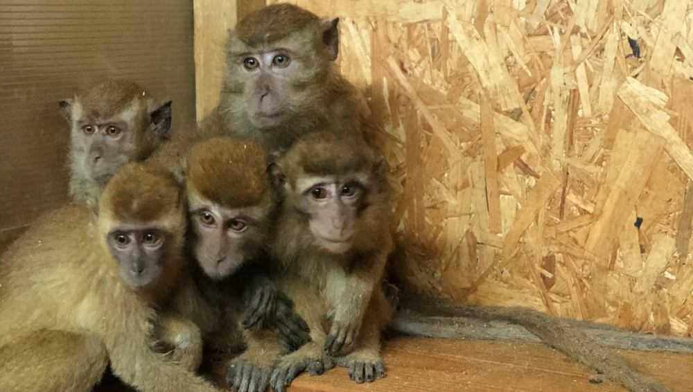 Контрабандных обезьянок в брянском приюте накормили всем миром
