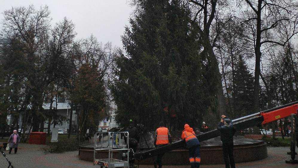 Новый год жители Брянской области встретят с опасными еловыми усачами