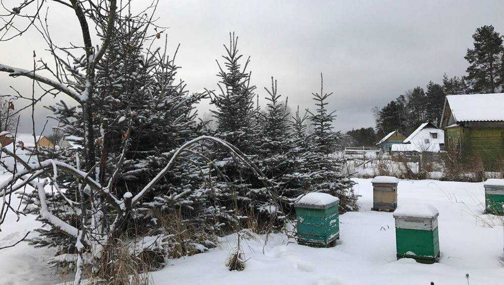 Перед Новым годом в Брянской области выпадет снег
