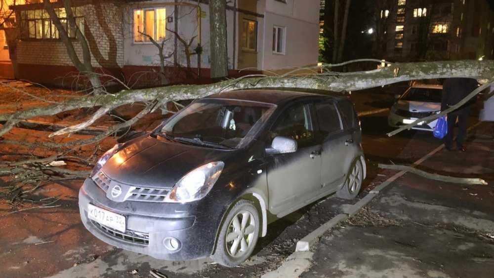 В Брянске сухое дерево рухнуло на автомобиль у школы № 60
