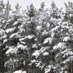 В Рогнедино похвастались свежевыпавшим снегом