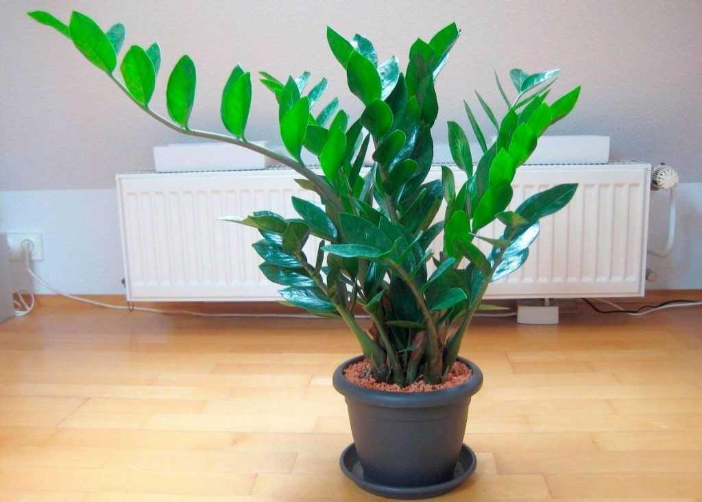 Какие задачи призваны выполнять комнатные растения