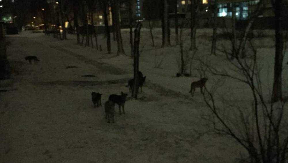 Брянский депутат Валуев сделал заявление по поводу бродячих собак