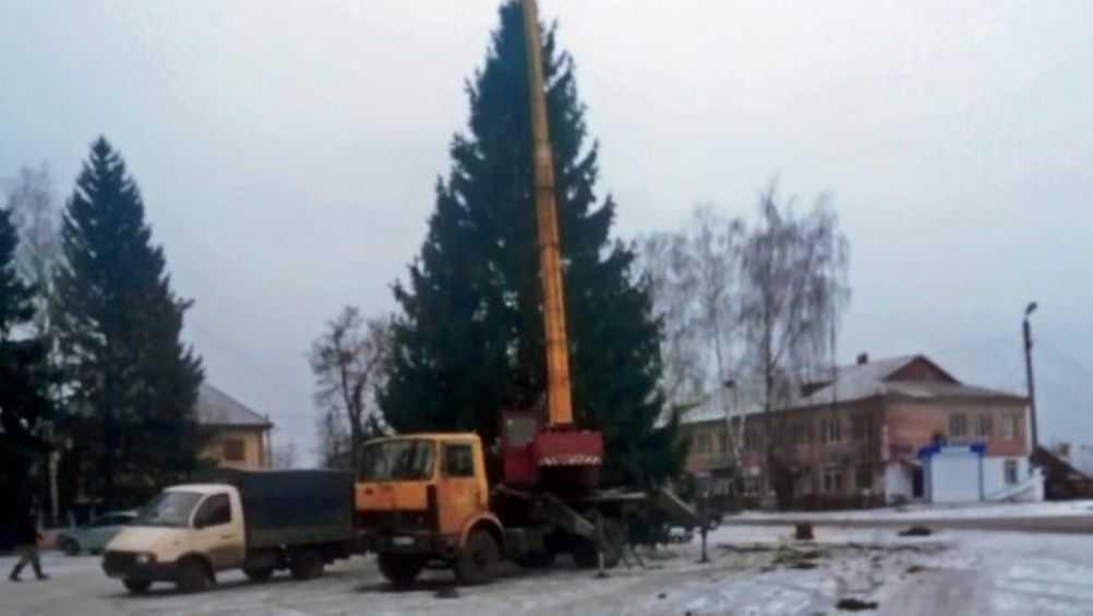В Локте установили главную новогоднюю ель Брасовского района