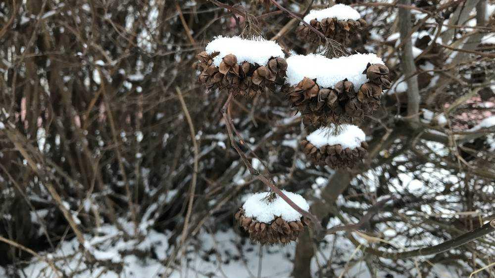 В Брянской области 4 декабря будет морозная погода