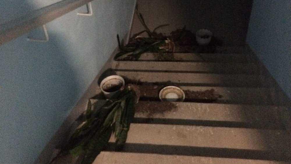 В Брянске хулиганы разгромили растения в подъезде брянского дома