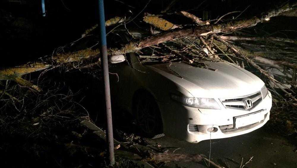 В Брянске упавшее дерево повредило припаркованный автомобиль
