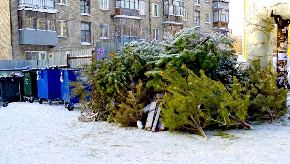 Брянцам указали места для выброса новогодних елок