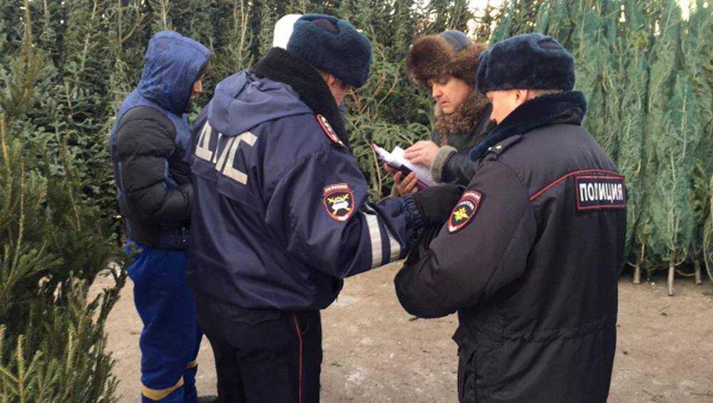 За незаконную вырубку елок брянских лесах оштрафовали 67 человек