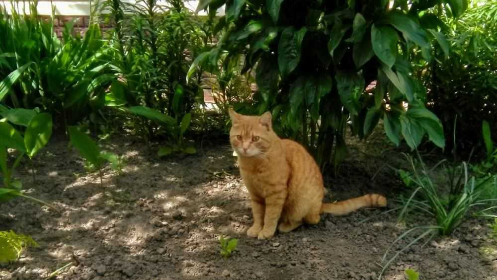 Житель Погара страстно обратился к похитителям его рыжего кота