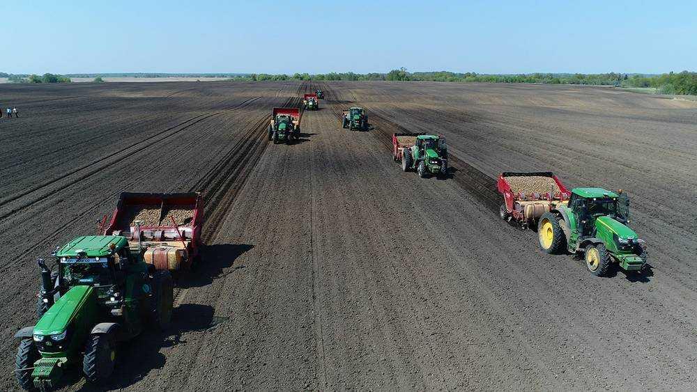 В Брянске начали подготовку к Международному дню картофельного поля