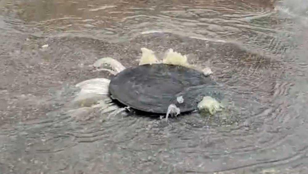 Брянский «ЖилСоцСтрой» оштрафовали за ущерб природе