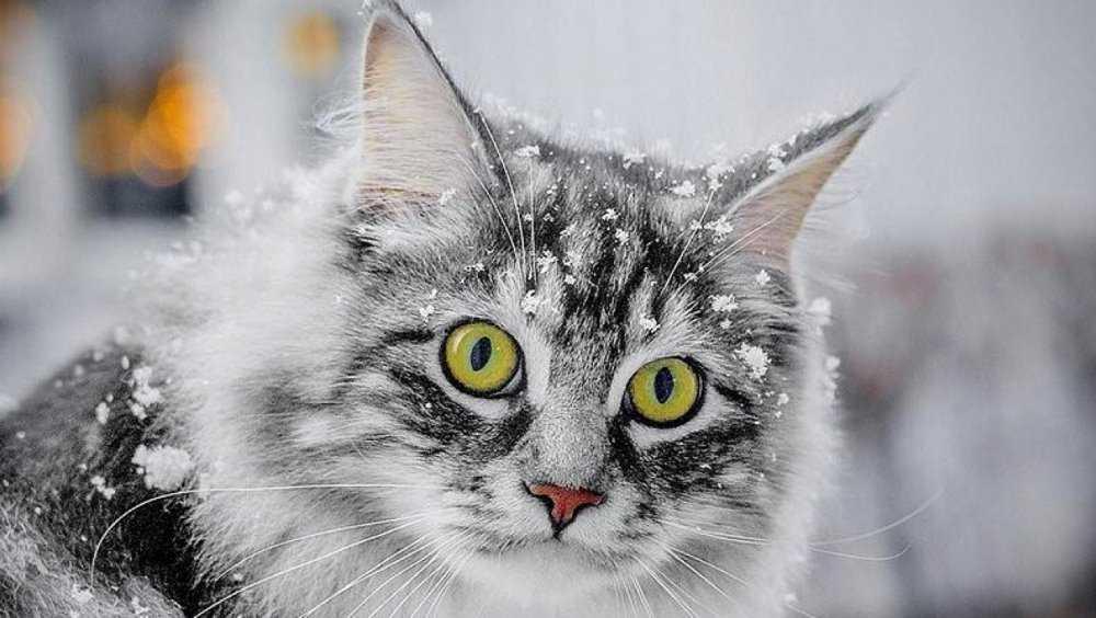 В Советском районе Брянска  живодёры отравили котят