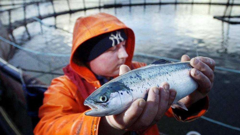 В Брянскую область запретили ввоз лосося и форели из Норвегии