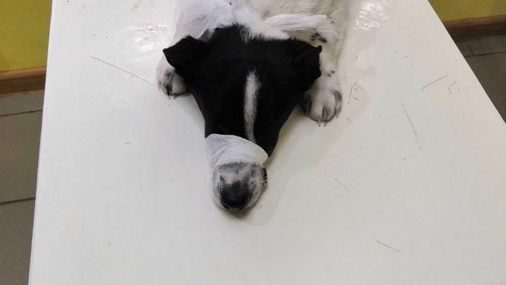 В Брянске ветеринар приютила спасённую собаку