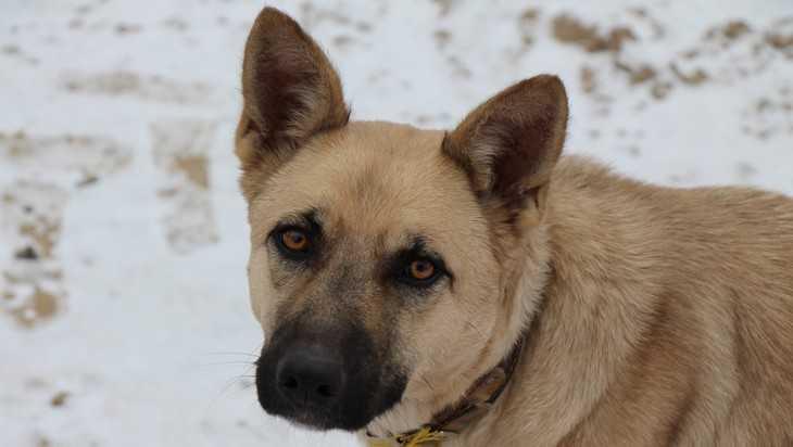 В Брянске сняли видео о схватке маршрутчика с бродячим псом