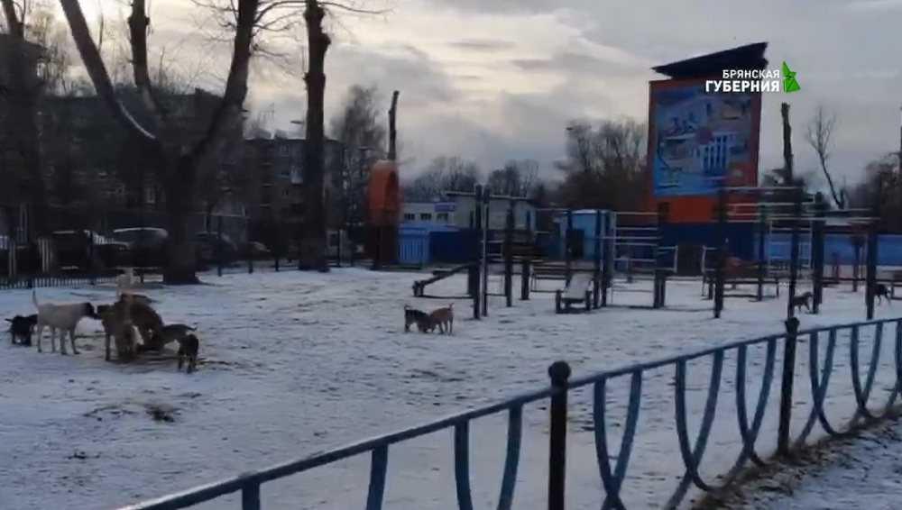 В Брянске появится приют для бродячих животных