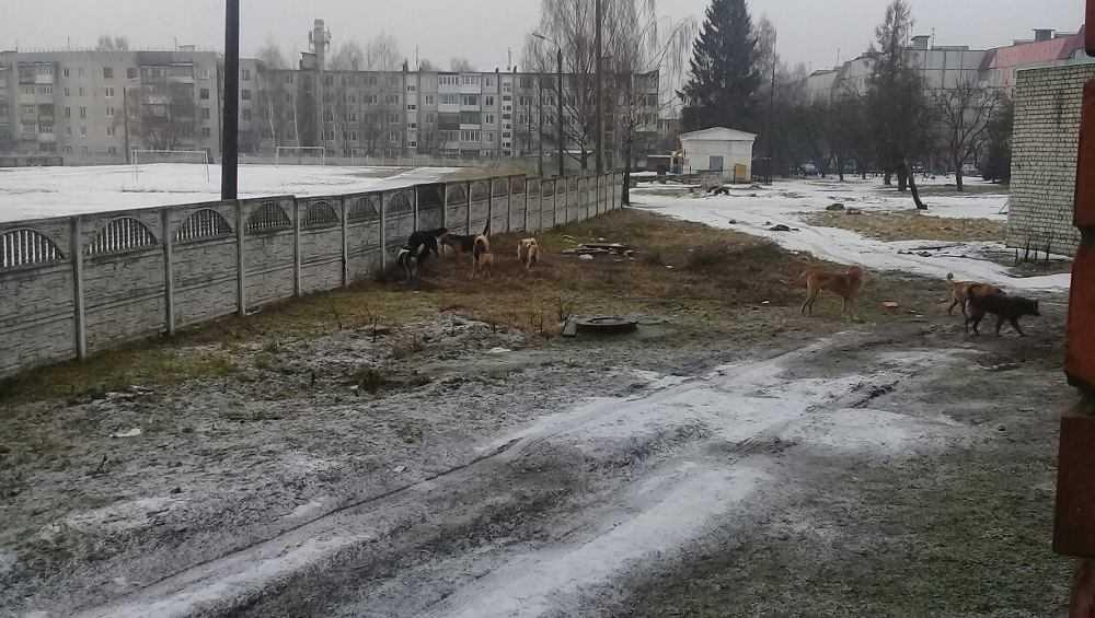 В Дятькове стая собак возле гимназии напала на школьника
